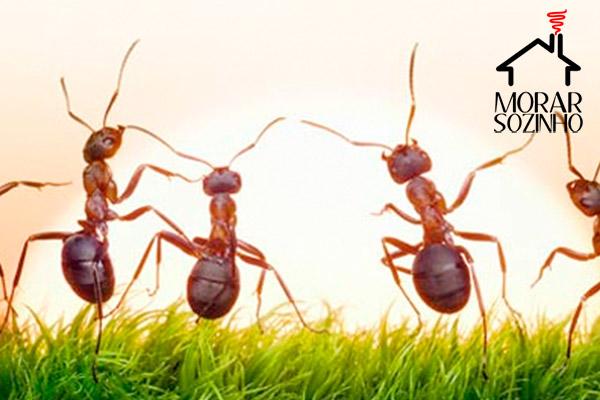 receitas caseiras acabar formigas morar sozinho